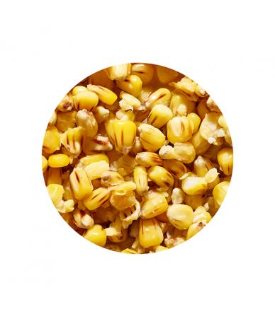 Virtos sėklos ir Kukurūzai Genlog Vanilė