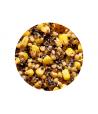 Virtos sėklos ir Kukurūzai Genlog